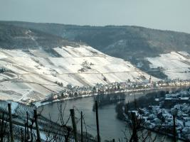 Weinberge, Winter, Zell